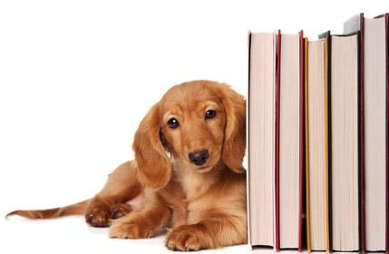 Librairie, livres sur le comportement du chien et du chat, éducation du  chien - Zoopsy